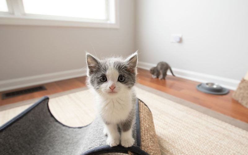 How_To_Keep_A_Cat_From_Scratching_Furniture