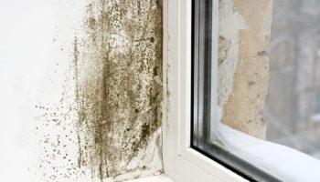 Mold-on-Windowsill